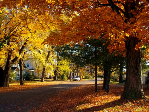 I lived on this street for a short time while waiting to move into my house.  It is a beautiful area.