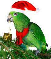 Presents and other gift wrapping items can be dangerous for your pet bird.