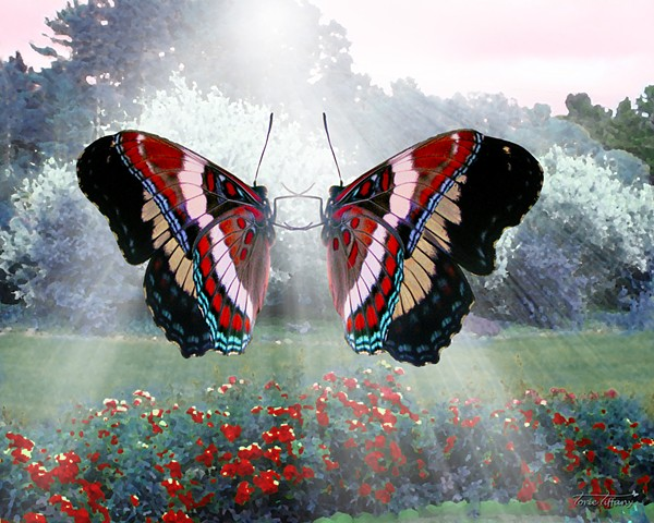 Image result for butterfly art