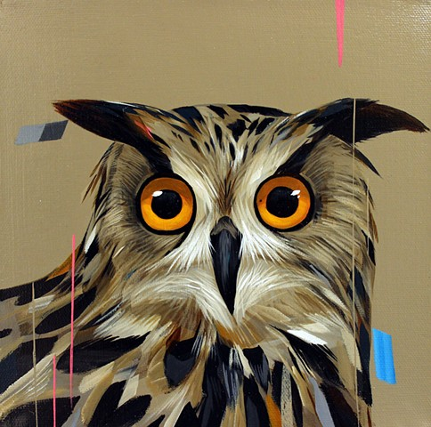 Bubo Bubo (eurasian eagle owl)