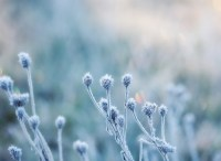 abstract natural background from frozen plant covered with ...