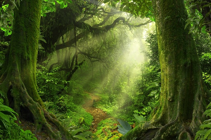 Fotobehang Tropische jungle  Pixers  We leven om te