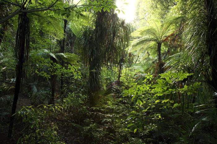 Fototapete Dichten Dschungel  Pixers  Wir leben um zu