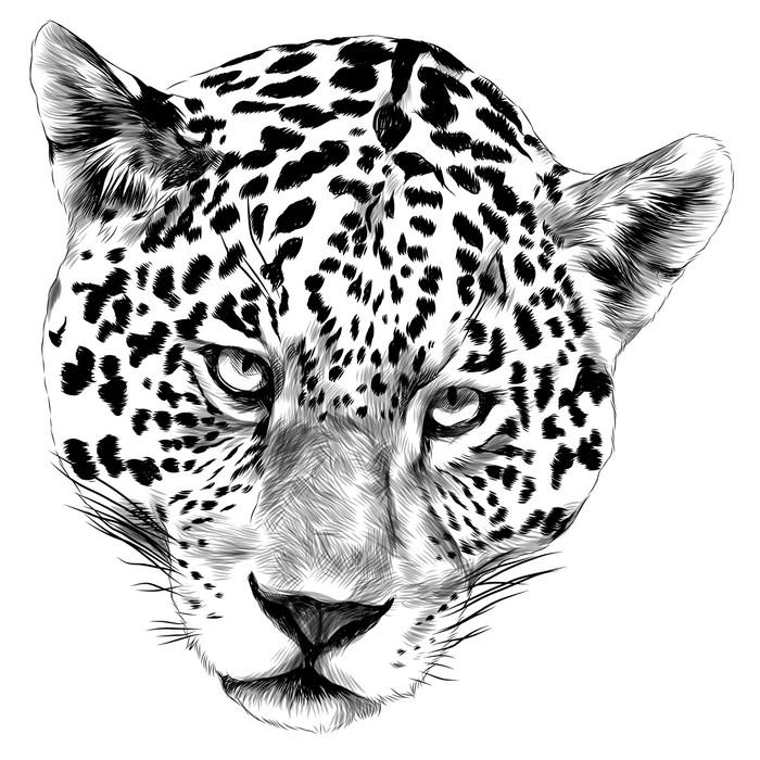 Fototapete Jaguar Kopf Skizze Vektorgrafiken Monochrom SchwarzWeiZeichnung  Pixers  Wir