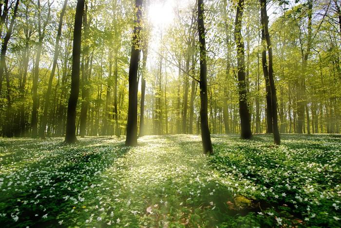 Fototapete Waldlichtung im Gegenlicht  Pixers  Wir