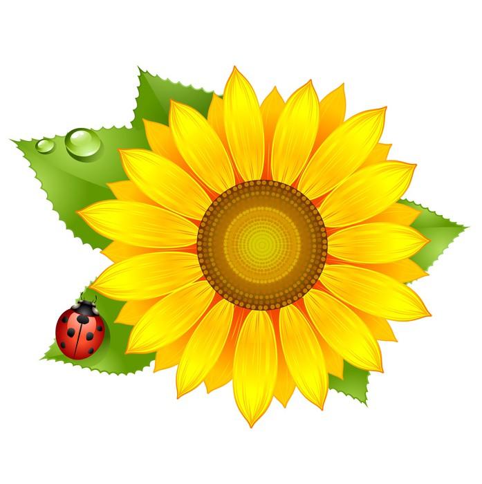 Fototapete Sonnenblume mit Marienkfer  Pixers  Wir leben um zu verndern