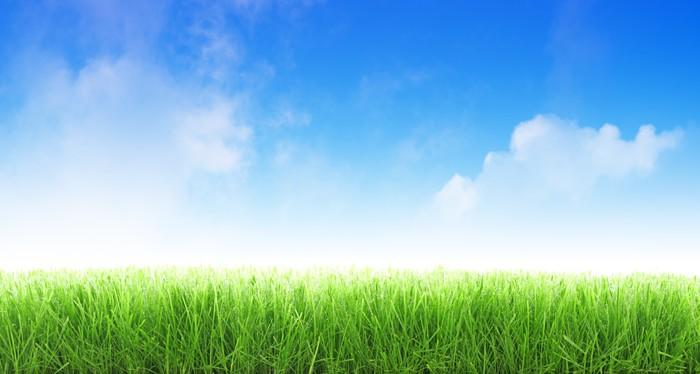 Fototapete Cut Gras auf blauen Himmel Hintergrund  Pixers