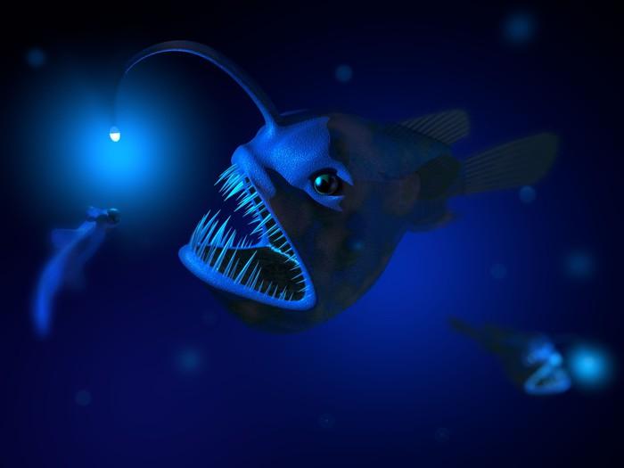 Fototapete Anglerfisch  Pixers  Wir leben um zu verndern