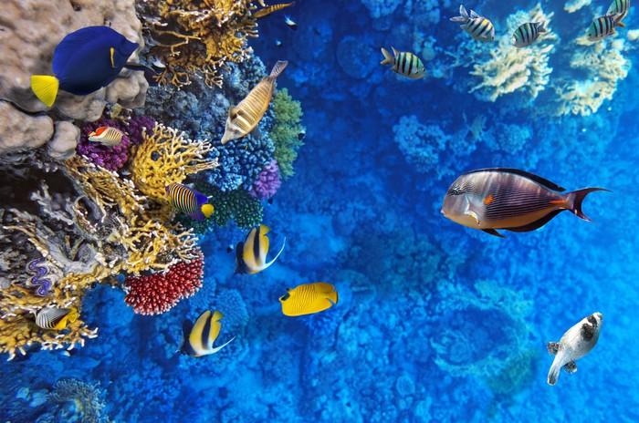 Fototapete Korallen und Fische im Roten Meer gypten