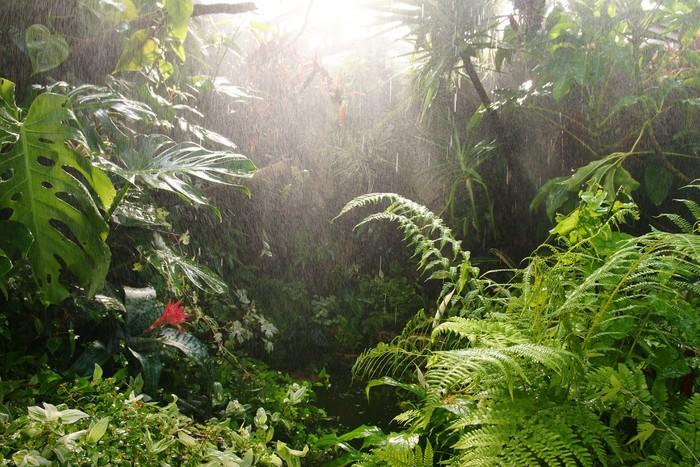 Fotobehang Tropisch regenwoud  Pixers  We leven om te