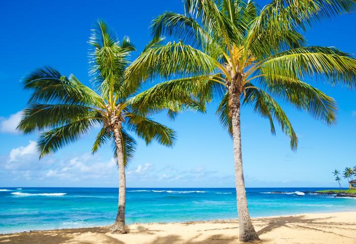 Fotobehang Palmbomen op het strand in Hawa  Pixers  We