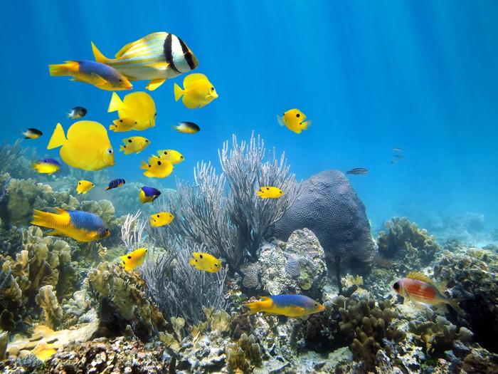 Fotobehang Onderwater koraalrif met school van vissen
