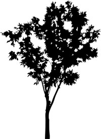 deciduous small tree silhouette isolated on white Wall ...