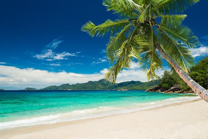 Fotobehang Tropisch strand met palmbomen  Pixers  We