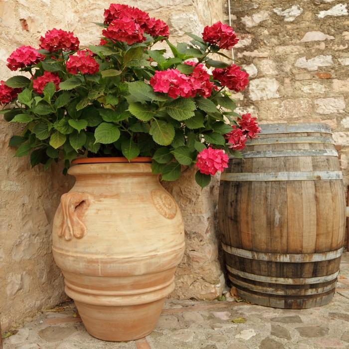 Carta da Parati Fioritura ortensia in vaso di ceramica