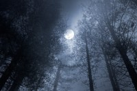 Forest full moon Wall Mural  Pixers  We live to change