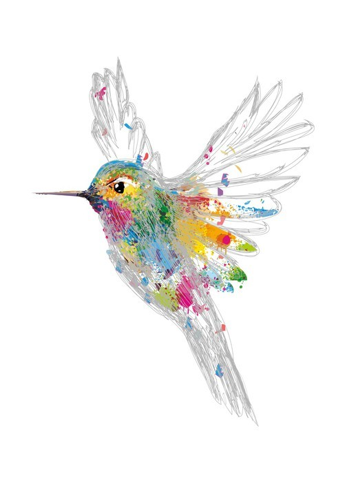 Fotobehang Kolibrie  Pixers  We leven om te veranderen