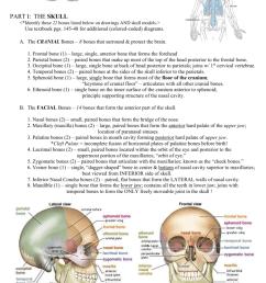lacrimal bone diagram [ 791 x 1024 Pixel ]