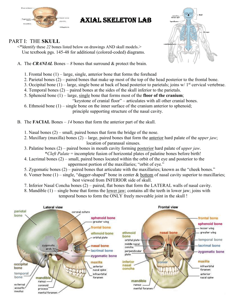 hight resolution of lacrimal bone diagram