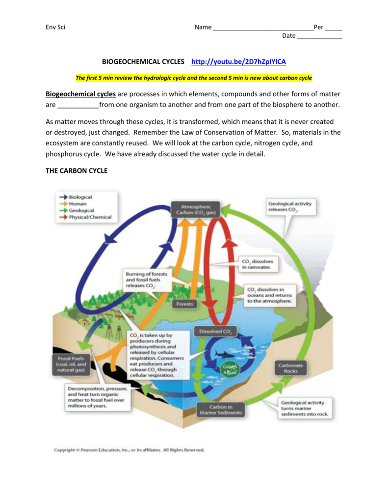 medium resolution of diagram of the carbon and nitrogen cycle
