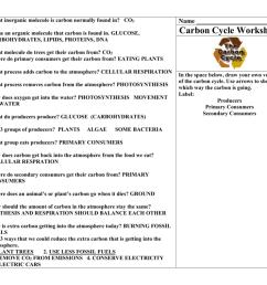 33 Carbon Oxygen Cycle Worksheet - Worksheet Project List [ 791 x 1024 Pixel ]