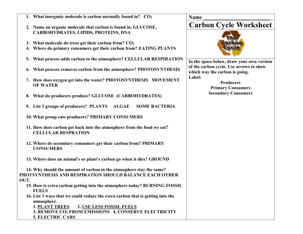 hight resolution of 33 Carbon Oxygen Cycle Worksheet - Worksheet Project List
