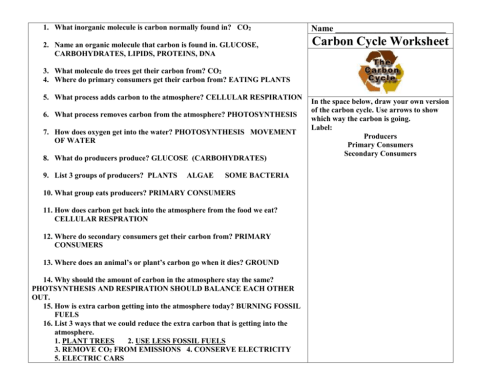 small resolution of 33 Carbon Oxygen Cycle Worksheet - Worksheet Project List