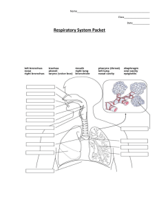 Respiratory Worksheet: