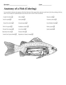 Using a Dichotomous Classification Key to Identify Common