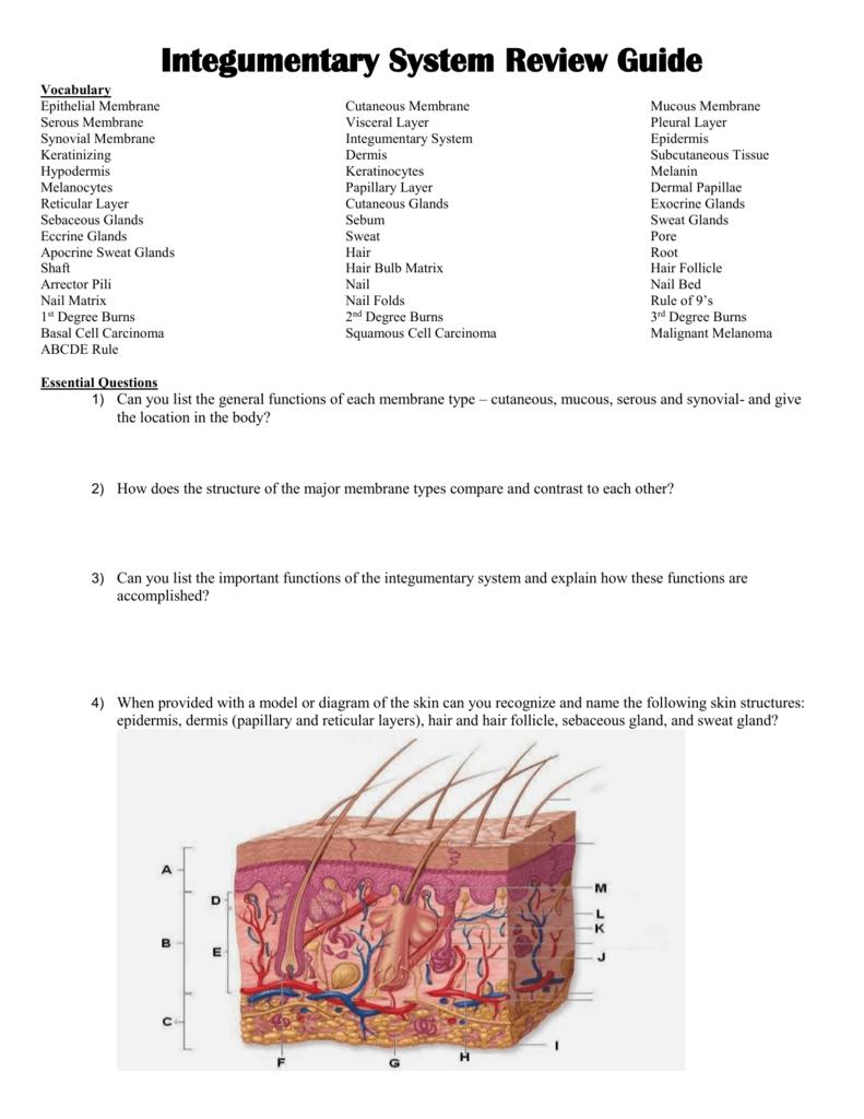 medium resolution of nail skin diagram