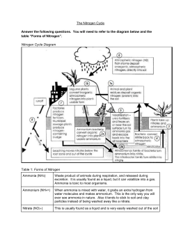 Nitrogen Cycle Worksheet