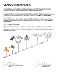 worksheet. Cladogram Worksheet. Worksheet Fun Worksheet ...