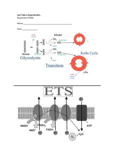 Cellular Respiration Animation Notes KEY