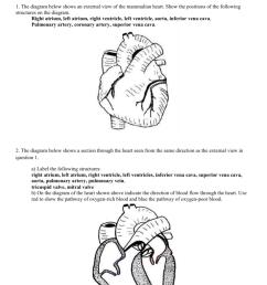 heart diagram with blood flow [ 791 x 1024 Pixel ]