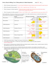Cellular Respiration Breaking Down Energy Worksheet ...