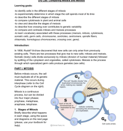 dry lab comparing mitosis and meiosis learning goals to identify cells in the different stages of mitosis to experimentally determine in which stage the  [ 791 x 1024 Pixel ]