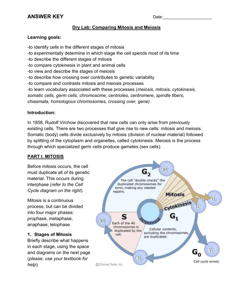 hight resolution of dry lab comparing mitosis and meiosis learning goals to identify cells in the different stages of mitosis to experimentally determine in which stage the