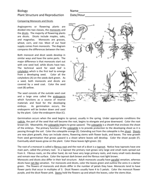 small resolution of flower monocot dicot diagram