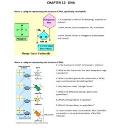 dna nucleotide and basis diagram [ 791 x 1024 Pixel ]