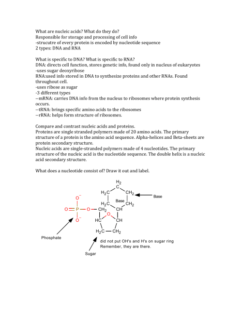 small resolution of nucleic acid diagram single strand