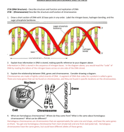 genetics test practice questions answer questions on a separate sheet of paper lt16 dna structure describe structure and function and replication of dna  [ 791 x 1024 Pixel ]