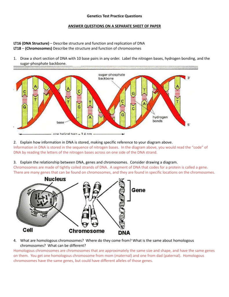 medium resolution of genetics test practice questions answer questions on a separate sheet of paper lt16 dna structure describe structure and function and replication of dna