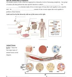 34 Animal Organ Systems Worksheet Answer Key - Worksheet Resource Plans [ 1024 x 791 Pixel ]