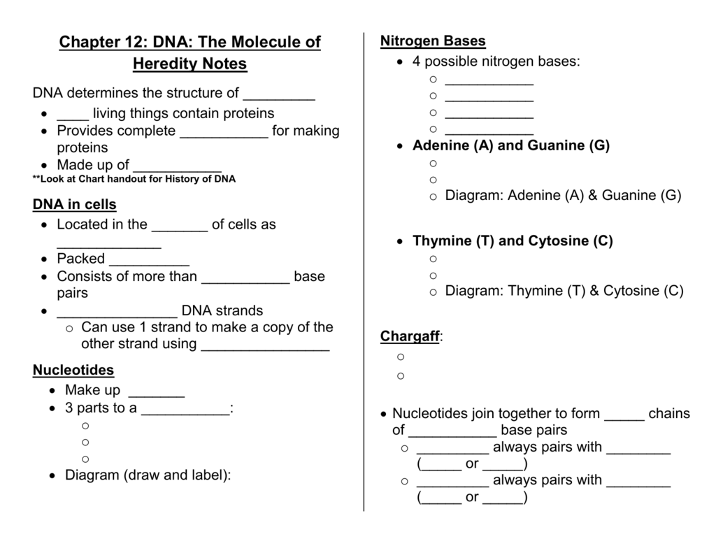 Chapter 12 Dna The Molecule Of Heredity Notes