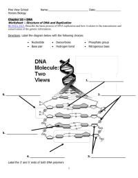 Dna Molecule And Replication Worksheet. Worksheets ...