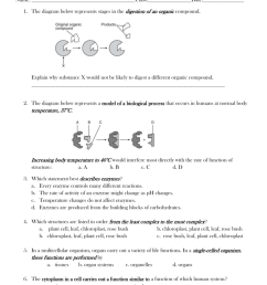 the diagram below represents stages in the digestion of an organic compound explain why substance x would not be likely to digest a different  [ 791 x 1024 Pixel ]