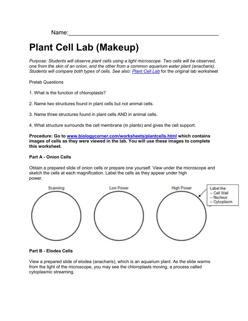 Virtual Microscope Lab Worksheet Answer Key : virtual, microscope, worksheet, answer, Plant, Virtual