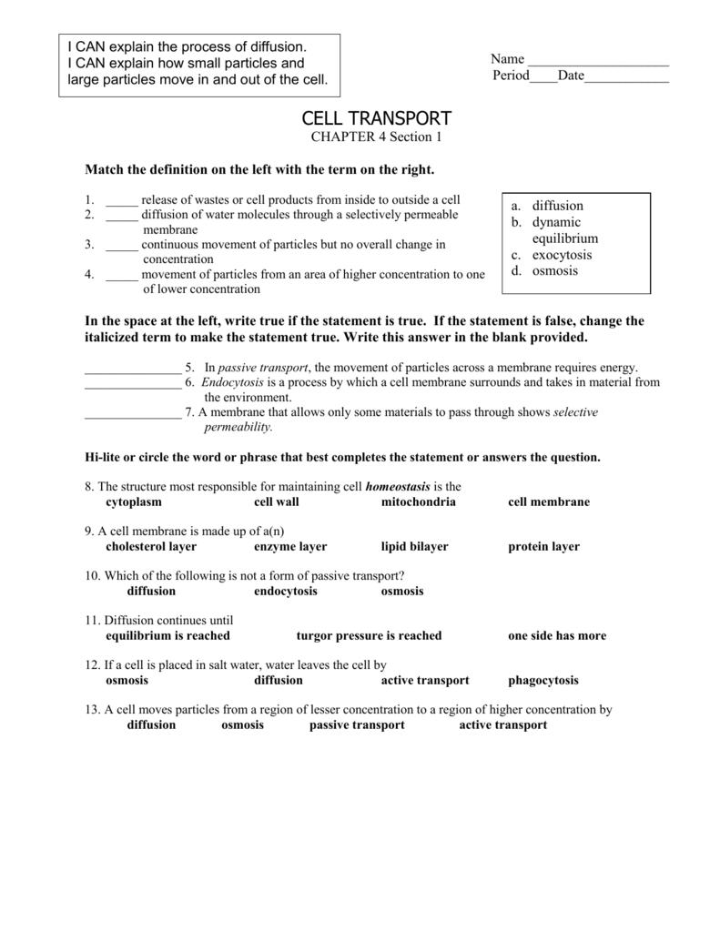 Cell Transport Worksheet Answer Key