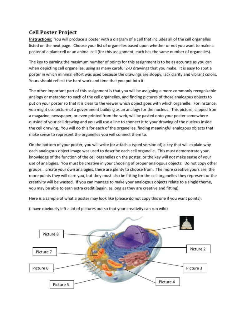 medium resolution of diagram of cell organelle pie