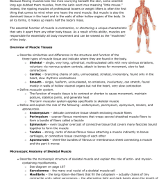 chapter 6 the muscular system because flexing muscles look like mice scurrying beneath the skin some scientist long ago dubbed them muscles from the latin  [ 791 x 1024 Pixel ]